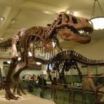 Roteiro Magnético no Museu Americano de História Natural – NY